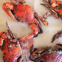 Obrycki's Maryland Steamed Crab Kit